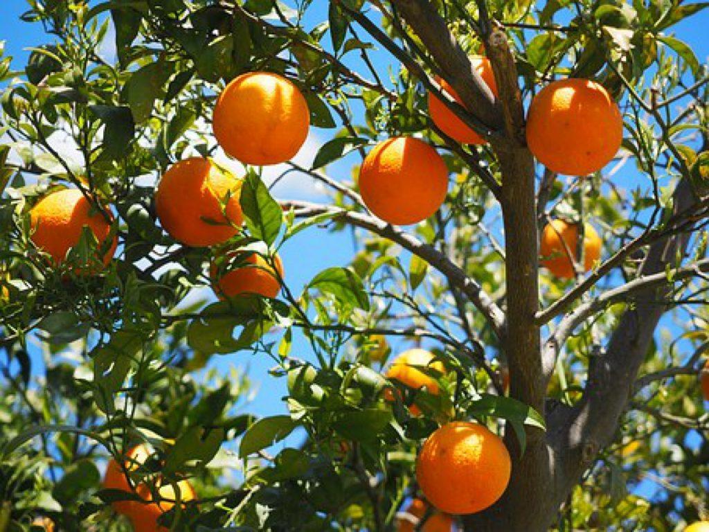 The Amazing Vitamin C